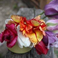 Деревенские тюльпаны :: ZNatasha -