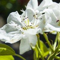Фотоконкурс «Красота!» - Весенние цветы :: Наталья (ShadeNataly) Мельник