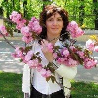 Сакура цвіте :: Степан Карачко