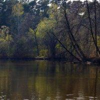 Апрельской акварелью раскрашены леса... :: Ольга Русанова (olg-rusanowa2010)