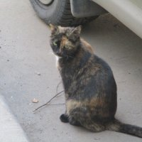 Кошка.. :: Зинаида