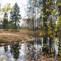 Весенний лес. :: Геннадий Порохов