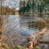 На лесном озере. :: Геннадий Порохов