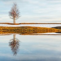 Дерево у озера :: Вячеслав Ложкин