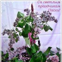 Поздравляю вас со светлым праздником Пасхи, дорогие друзья! :: Нина Корешкова