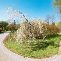 В ботаническом саду. :: Геннадий Порохов