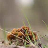 Первый гриб :: sorovey Sol