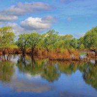 С голубою синевой прощается апрель... :: Лесо-Вед (Баранов)