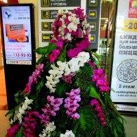 Цветочная красавица :: Нина Бутко