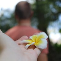 китайский цветок :: Ирэн Хоружик