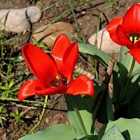 Весенние цветы :: Валентин Семчишин