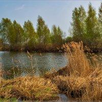 Ранняя весна в Подмосковье 3 :: Андрей Дворников