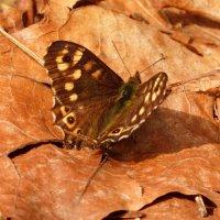 про апрельских бабочек  1 :: Александр Прокудин