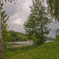 Прекрасная зелень весны :: Ольга Винницкая (Olenka)