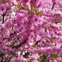 Весна :: Елена Иванова