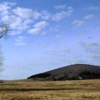 Одинокий тополь и гора Темир... :: Дмитрий Петренко