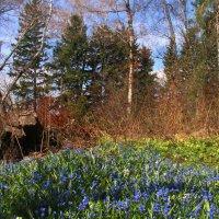 На лесной полянке :: владимир тимошенко