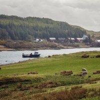 Шотландский пейзаж :: Galina
