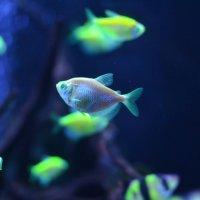 Подводный мир :: Ксения Комина