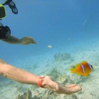 В красном море с аквалангом :: Tatiana Kretova