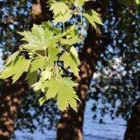 Tree on the lake :: Nikola Ivanovski