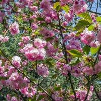 В  нашем парке Весна! :: Варвара