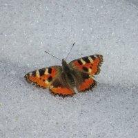 Посадка на снег :: Александр Смирнов