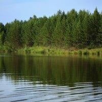 Зеленоглазое лето :: Нэля Лысенко