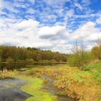 На берегу весеннего озера :: Андрей Снегерёв