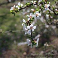 весна :: Марина Белоусова
