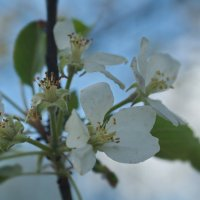 весна :: Андрей Бимов