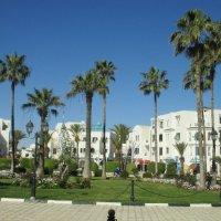 Тунис :: Алла Захарова