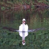 Зеркальное отражение в пруду.. :: Антонина Гугаева