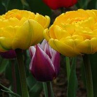 Цветы на клумбах города :: Милешкин Владимир Алексеевич