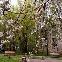 Весна в городе :: Елена Семигина