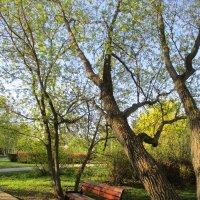 Весна.. :: Зинаида