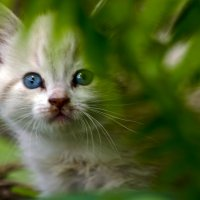 Без кота жизнь не та :) :: Татьяна Евдокимова