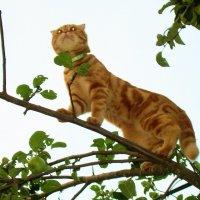 Я высоты не боюсь, мне бы только птичку  поймать... :: Татьяна Р