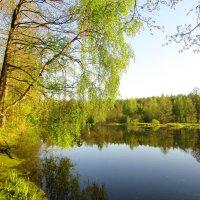 Весенним утром :: Андрей Снегерёв