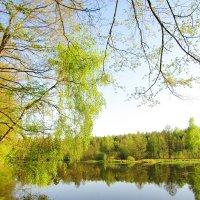 Весна на озере :: Андрей Снегерёв