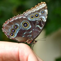 Бабочка :: Александра Климина