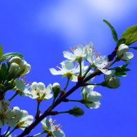 bloom :: Zinovi Seniak