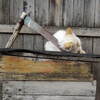 Лучше голову с плеч, чем на вас работать! :: Светлана Рябова-Шатунова
