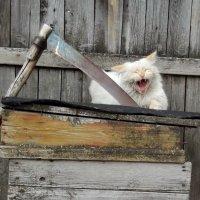 Не буду я в огороде работать!!! :: Светлана Рябова-Шатунова