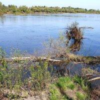 Река Десна меняет русло :: Александр Скамо