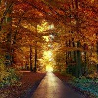 закат в осеннем лесу :: Elena Wymann