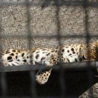 Зоопарк :: Наташа