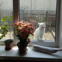 Кошка на окошке :: АННА