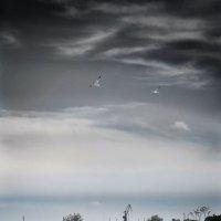 Перед дождем :: Александр Довгий