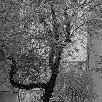 весна-горжанка :: sv.kaschuk